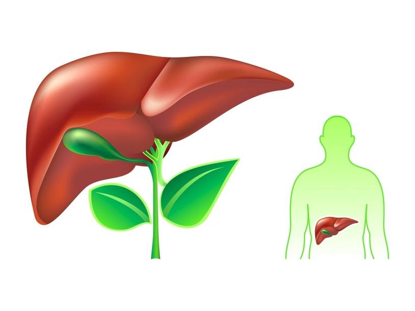 OAMENII DE STIINTA EXPLICA 9 MODURI DE VINDECARE A LEZIUNILOR HEPATICE